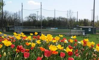 ballpark landscaping