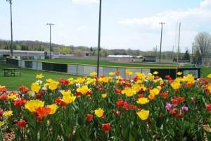 ballpark-landscaping-little-league-2