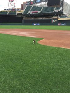Anna on Target Field infield inspection