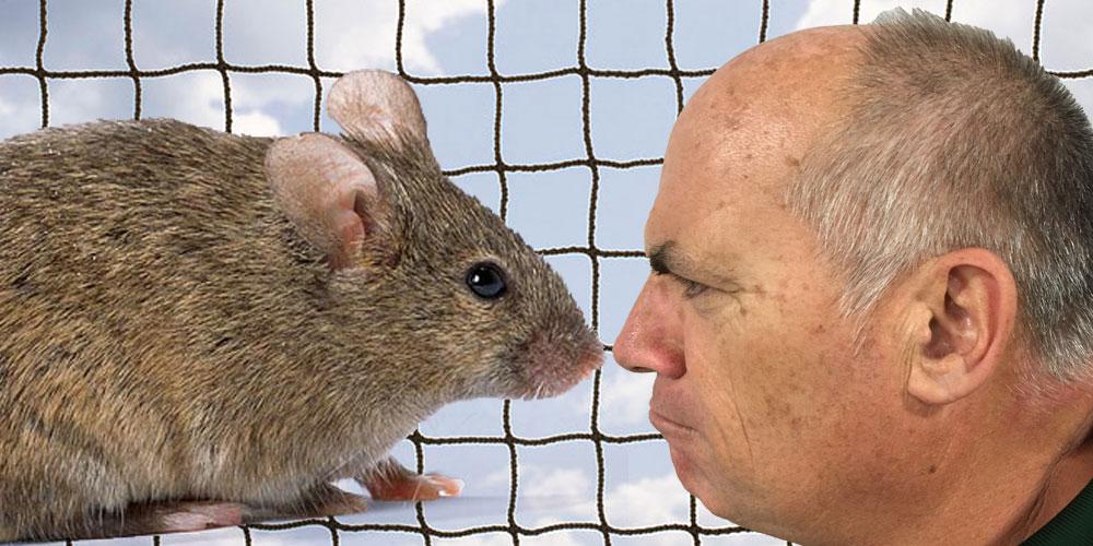 mouse-paul